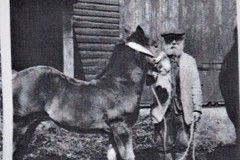 photo of horse and worker